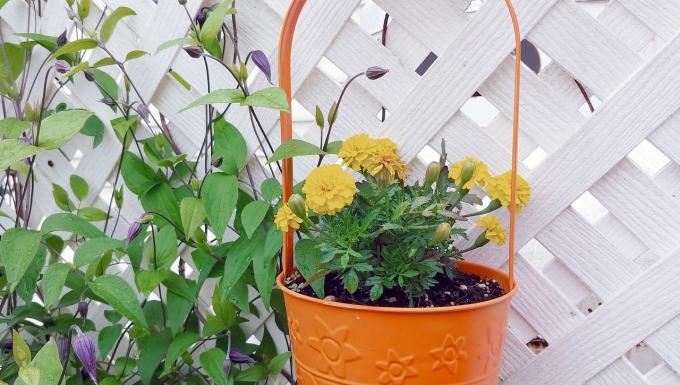 Photo d'un pot de fleur disposé sur un treillage