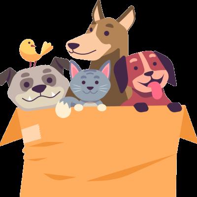 Des animaux domestiques dans un carton.
