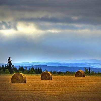 Vue d'un champs moissonné et bottelé