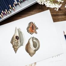Feuille blanche sur laquelle sont dessinés des coquillages