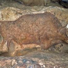 Peinture de bison présente dans la grotte de Font de Gaume