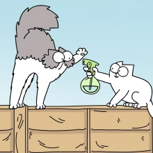 Deux chats se chamaillant.
